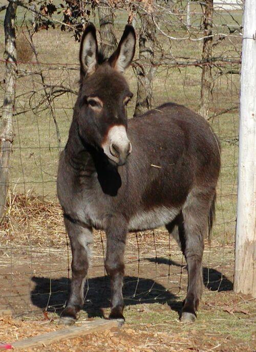 Atemberaubend Der Zwergesel - Little Friends Ranch #TW_49