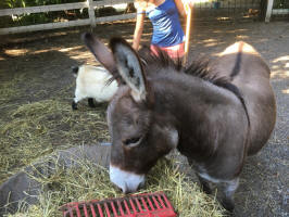 Rescued Donkeys
